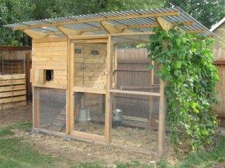 chicken coop10