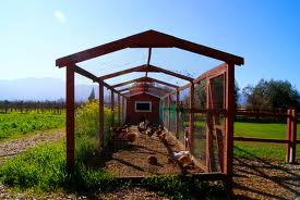 chicken coop26