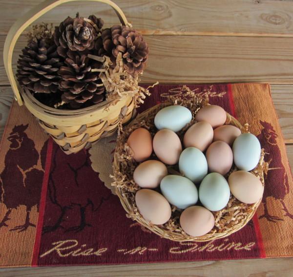 nest run eggs