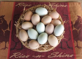 Nest run eggs from the ranch