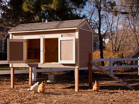 Coop Chikens Free Access Sliding Chicken Coop Door Design
