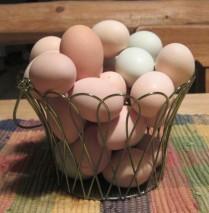 Eggs, Gavin Flock