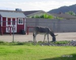Our Burro at TBN Ranch