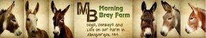 Morning bray farm