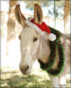 xmas donkey
