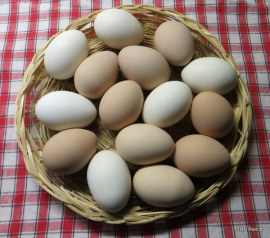 TBN Ranch Hardboild Farm Eggs