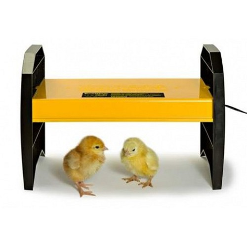 Controlling Temperature In The Brooder Tbn Ranch Chicken Keeping Resources