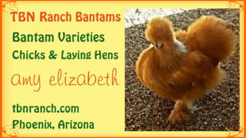 TBN Ranch Bantams border
