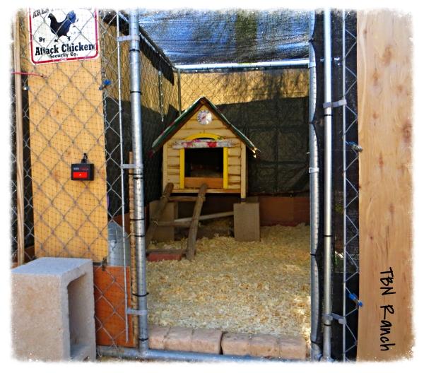 Chicken Coop 10-20-13