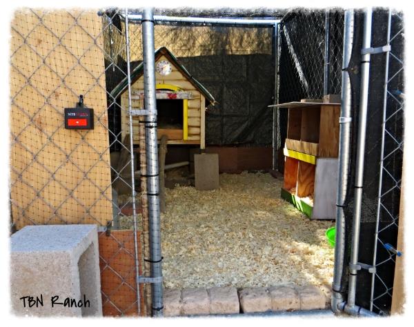 Chicken Coop 2 10-20-13