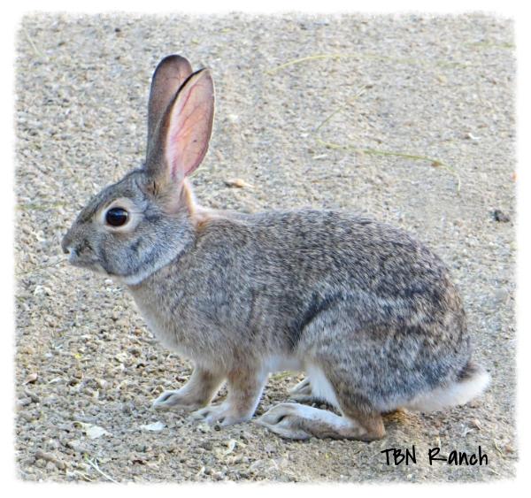 Bunny 11-9-13