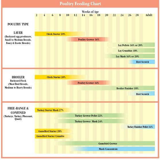 Poulrty Feeding Chart