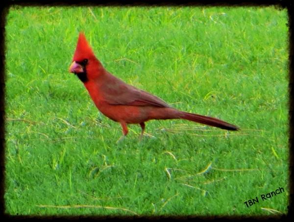 Cardinal 1 2-15-14