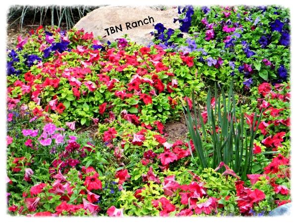 Flower garden 3-3-14