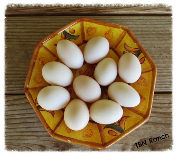 Silkie Bantam Eggs 3-12-14