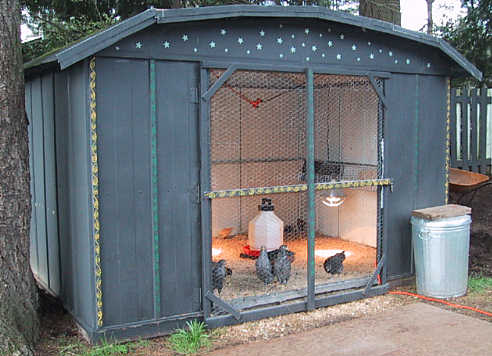 Chicken Coop Shed | TBN Ranch Chicken Keeping