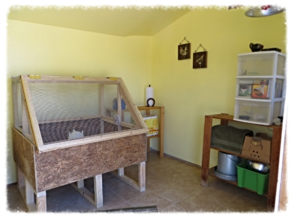 Brooder Shed with custom brooder box