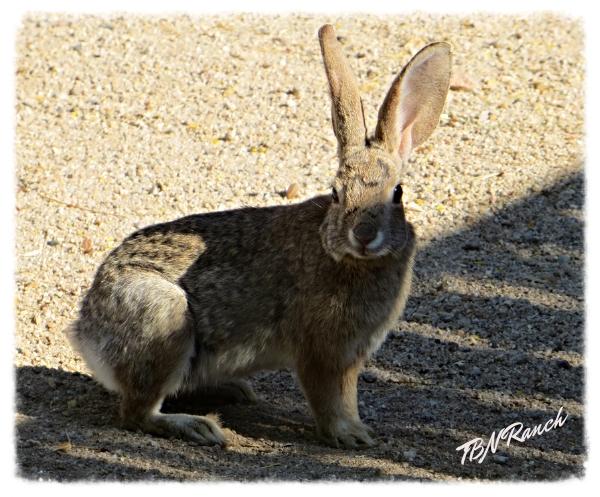 Bunny 5-4-14