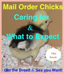 Mail Order Chicks