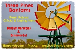 Three Pines Business Card for Blog 11-16-13