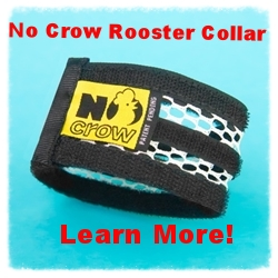 No Crow Rooster Collar