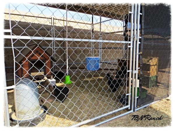 Chicken Coop 7-2014