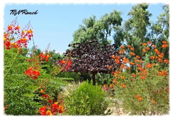 Metal Tree 7-14 Scottsdale