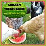 Chicken Treats Guide
