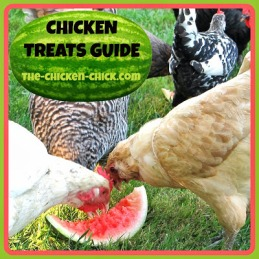 Chicken Treats Guide