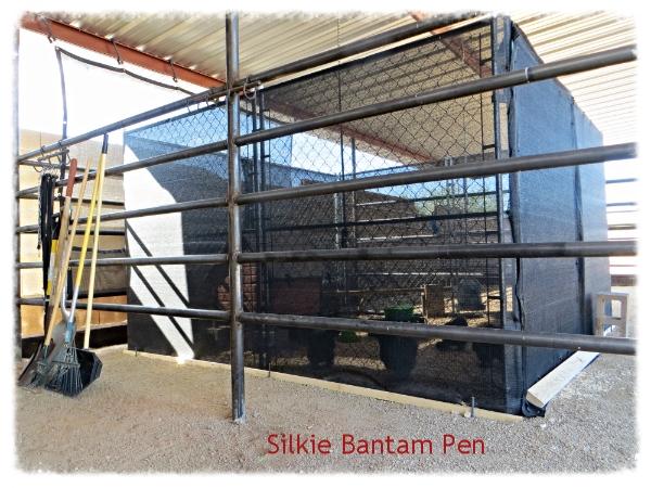 Silkie Bantam Pen 9-10-14
