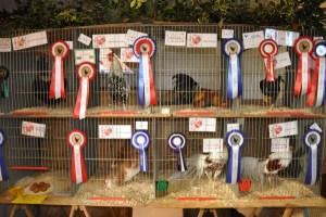 prize_poultry