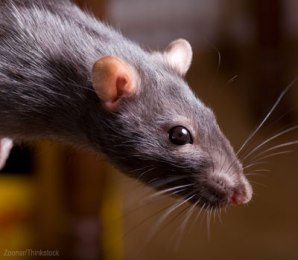 rodent-control_400