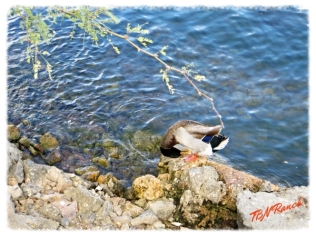 Saguaro Lake 3 11-15-14
