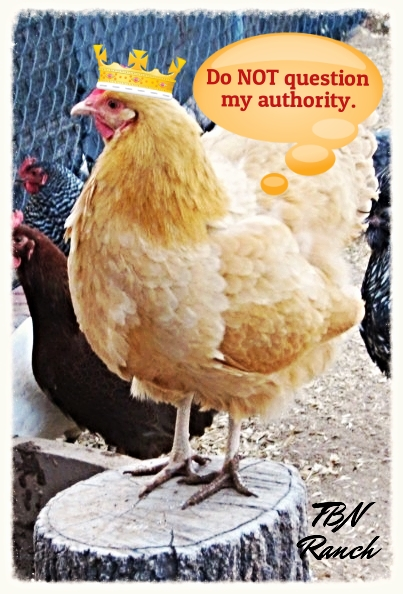 Do not question my authority 15