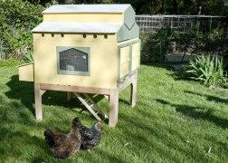 urban-chicken-coop-1_490
