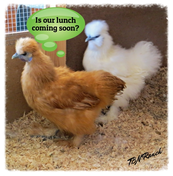 Is our lunch coming soon 2-15