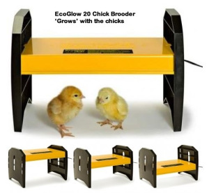 mini-advance-incubator-brooder-candler-egg-tray-set4a