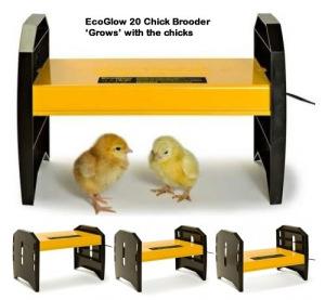 mini-advance-incubator-brooder-candler-egg-tray-set4a