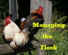 Managing the Flock