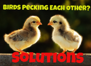 pecking solutions