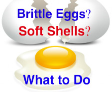 brittle eggs