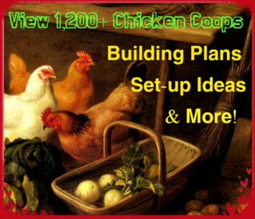 Chicken Coops and more