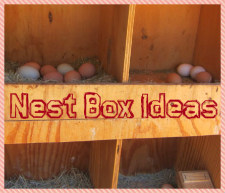 nest box ideas