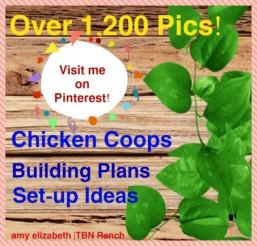 1200 pics 2