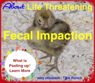 Fecal Impaction