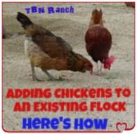 Adding Chickens 2