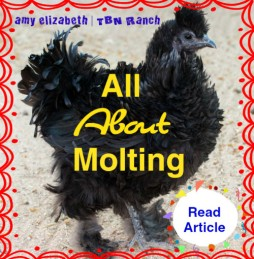 All About Molting