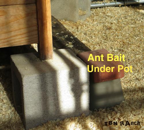 Ant Bait in Coop