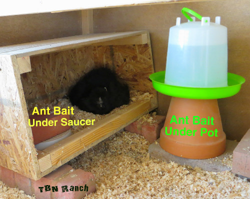Ant Baits and Silkie