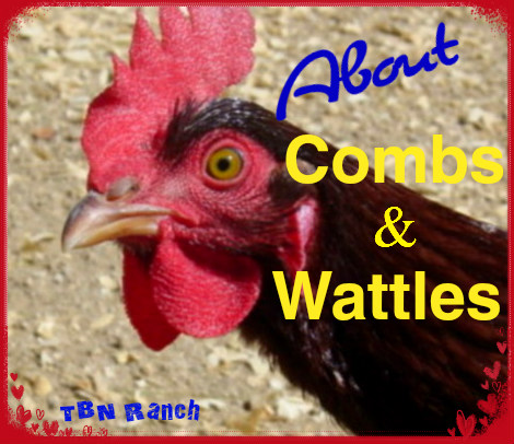 Combs & Wattles